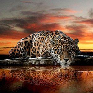 Diamond Painting Luipaard