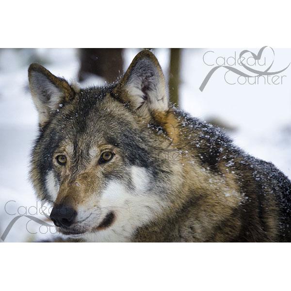 Diamond Painting Wolf